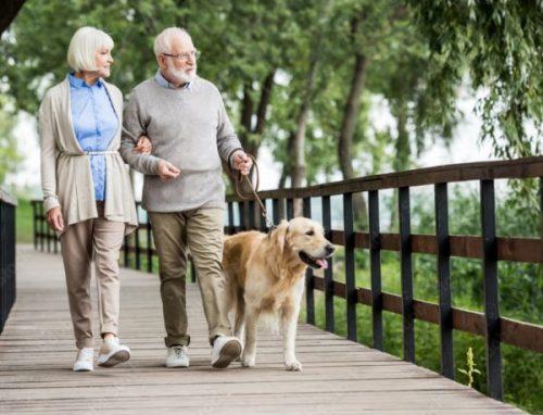 elderly walking dog